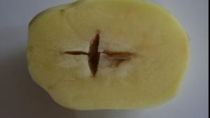 Crucea din cartof